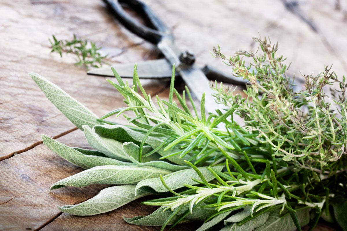 2) الزعتر: وهو من أفضل الأعشاب التي توفر النكهات والرائحة للطعام، ويفضل  إضافته للحساء، لينشر الرائحة والطعم اللذيذ مع مرور الوقت.